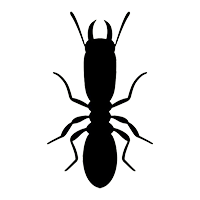 Termites | Arizona Pests | Affordable Pest Control